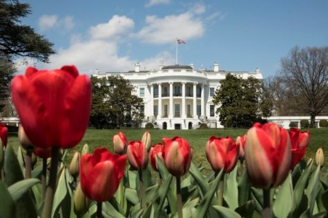 White House in spring is a site to behold