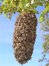 Frederick Bees, Bee Hive