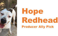 Senior Hope Redhead starts fund for dog with heartworms in Louisiana