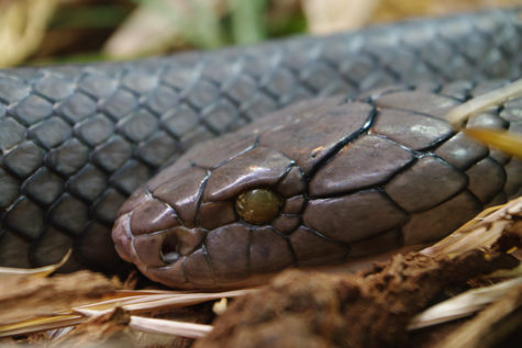 Spokesman shares some science about slithering snakes